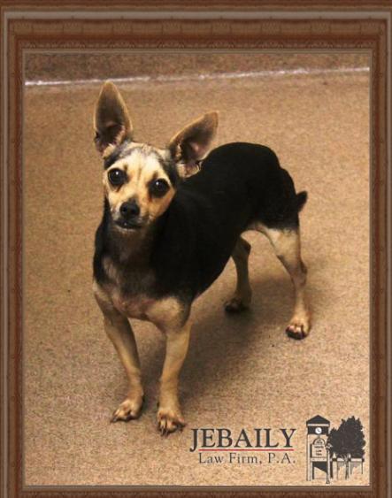 Alfalfa Dog of Month