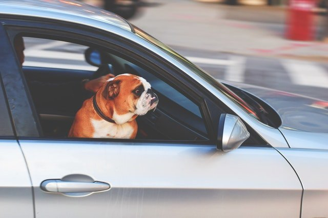 Pet Protection in Cars