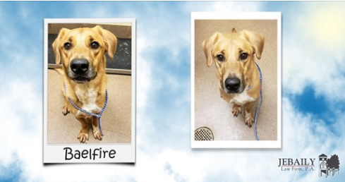 Meet Baelfire - Dog of the Month for October!