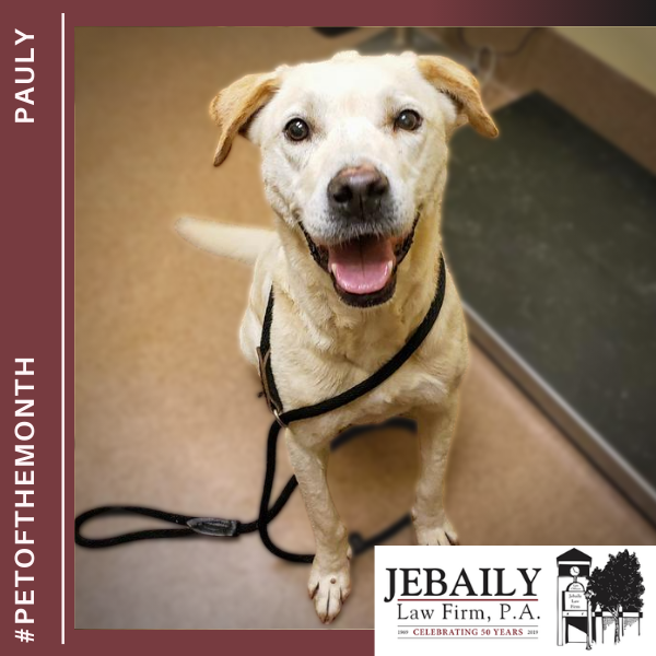 Pauly Pet of the Month November